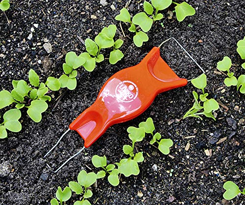 """Jätefaust """"Lucko"""" mit einer Länge von 25 cm in Rot von Bobby-Seeds Saatzucht"""
