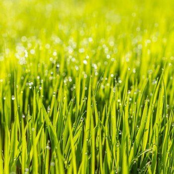 Rasen fräsen Tiefe (Wie tief sollte die Arbeitstiefe sein?)