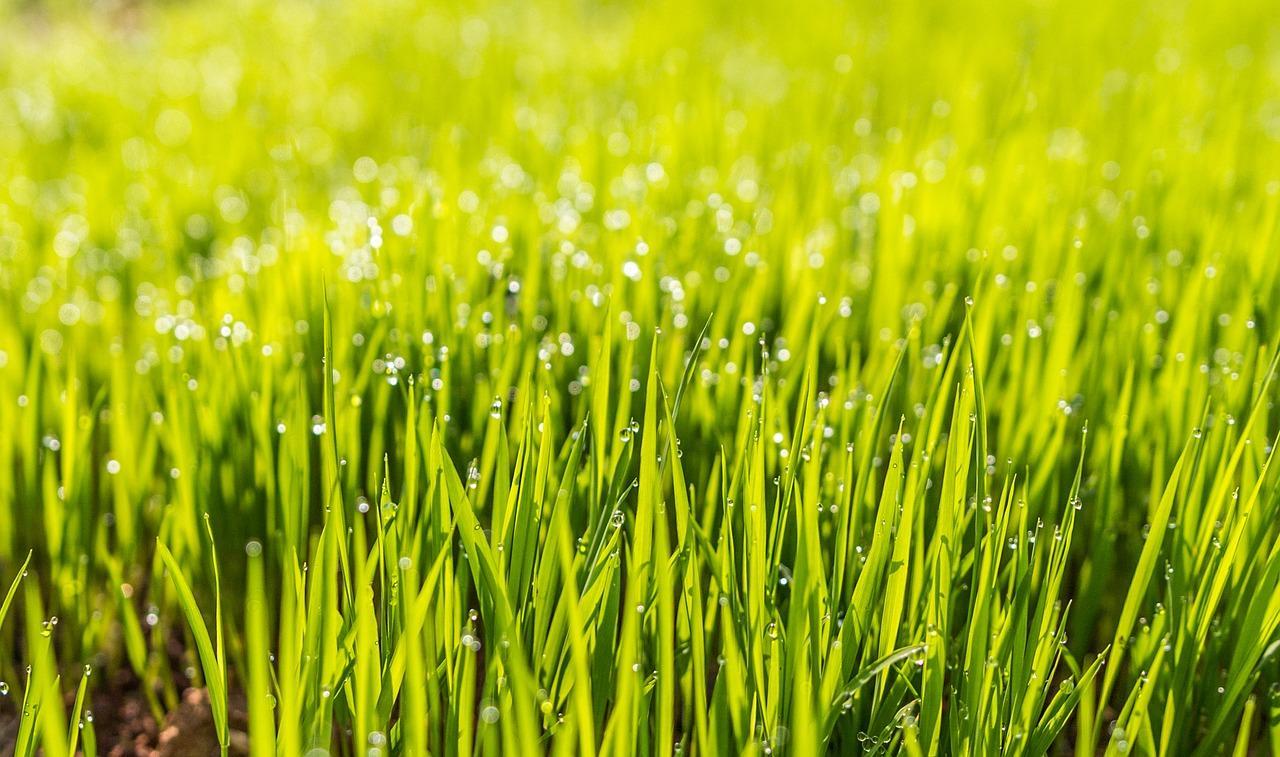 Rasen fräsen und neu anlegen- Die perfekte Tiefe ist entscheiden