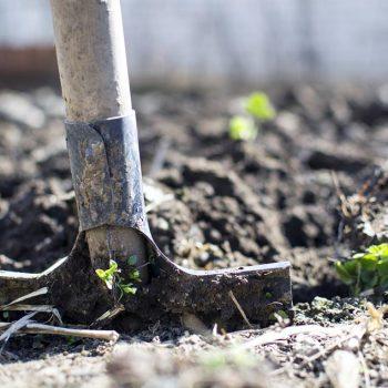 Gartenfräse oder Gartenhacke (Was ist die bessere Alternative?)
