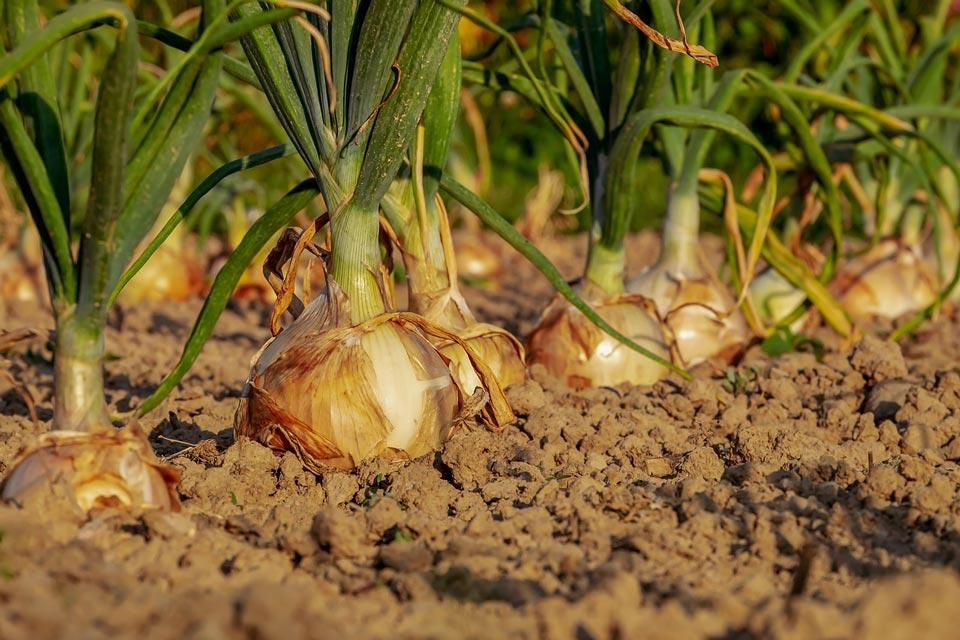 Boden Gemüsegarten gelockert