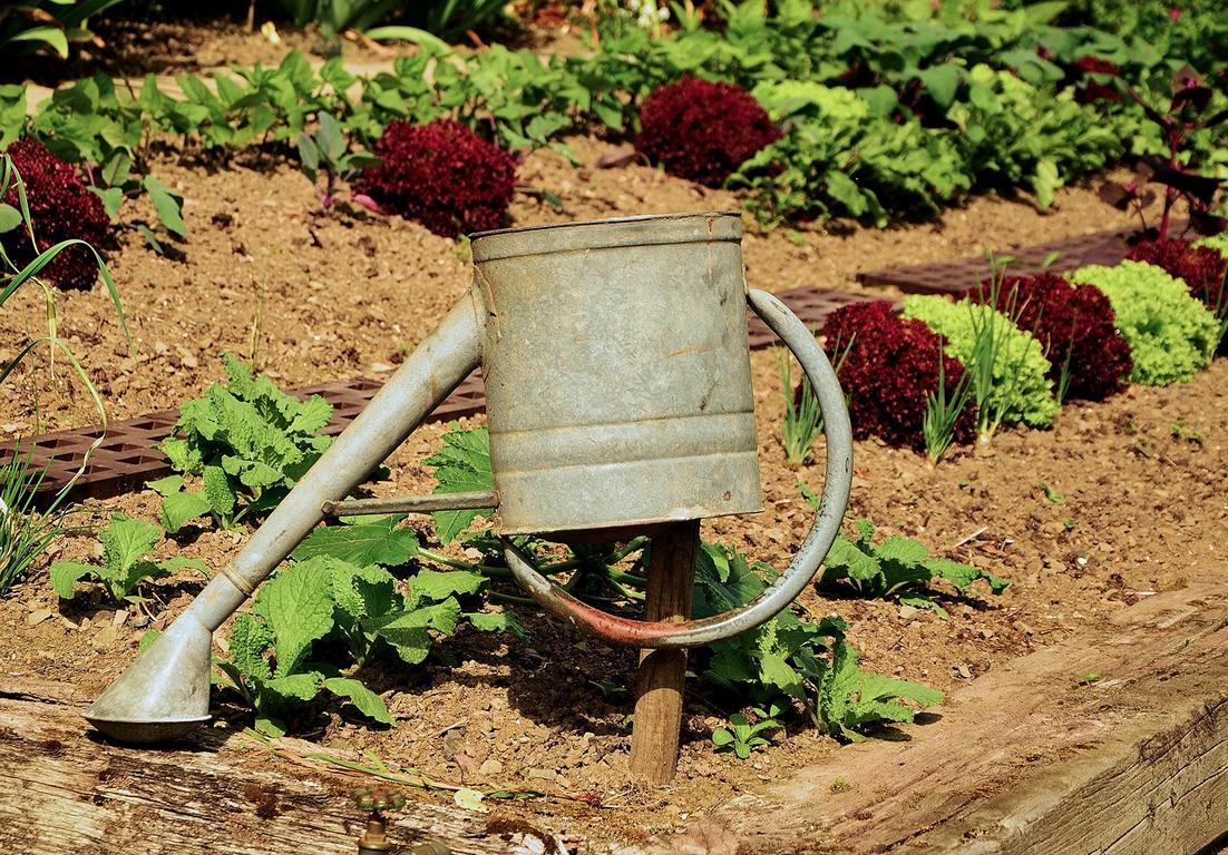 Gemüsebeet umgraben - Kein Problem mit der richtigen Benzin Bodenhacke