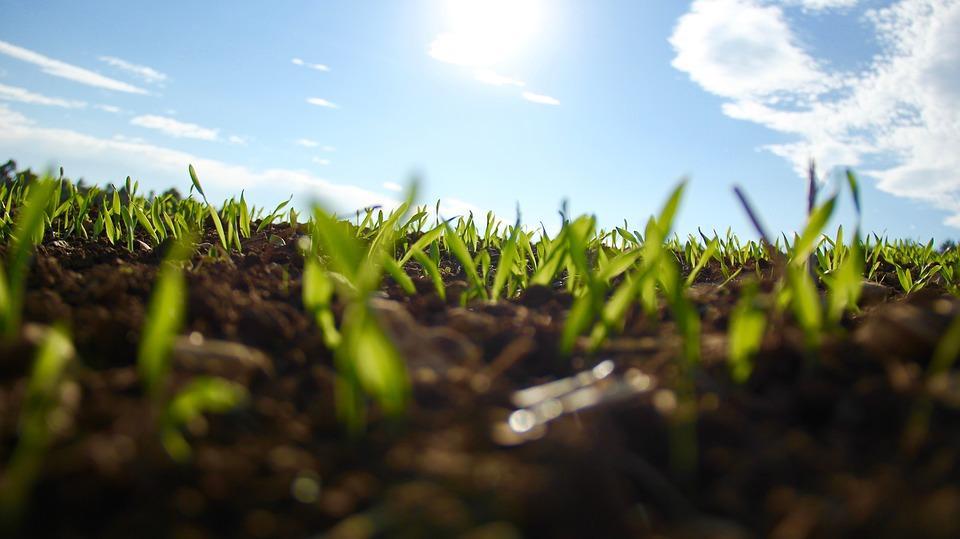 Gartenfräse richtige Anwendung für neues Gras