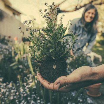 Wann Garten fräsen? | Frühling, Sommer, Herbst oder Winter?
