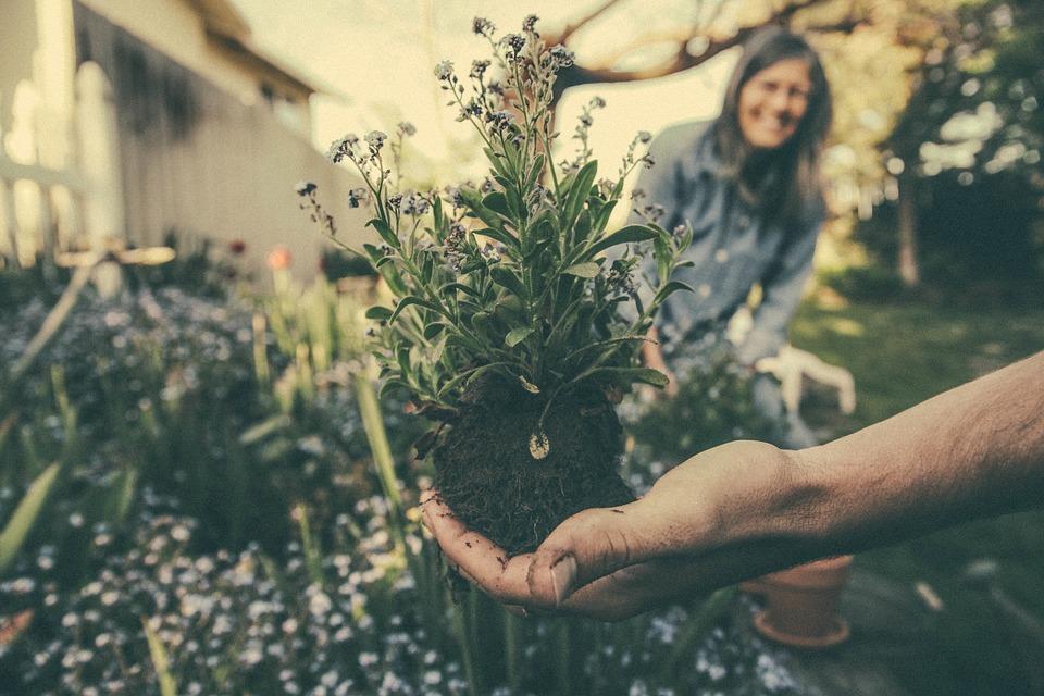 Pflanzen züchten
