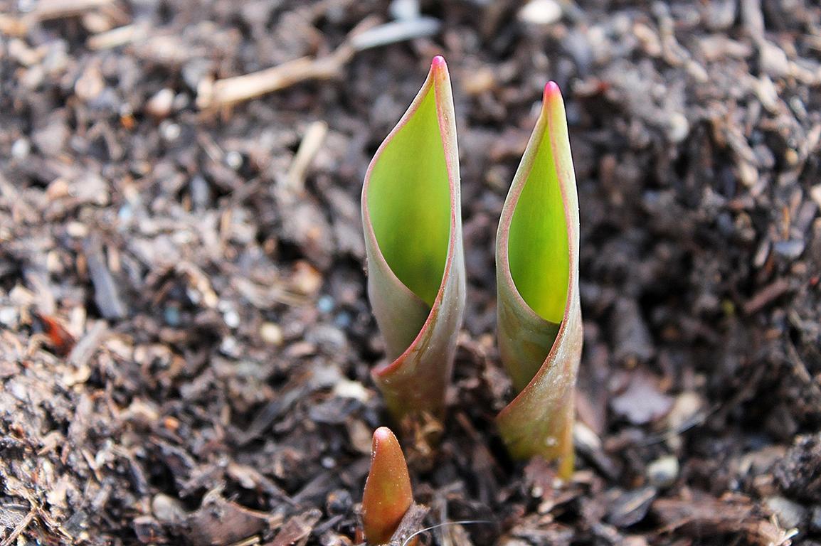 Mulch mit Pflanze