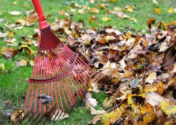 Gartenharke Vergleich (Top 5) | Beste Rasenharke für Garten?