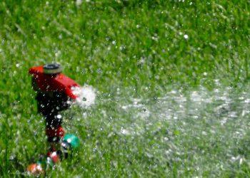 Bewässerungspumpe Vergleich (Top 5) | Garten richtig bewässern
