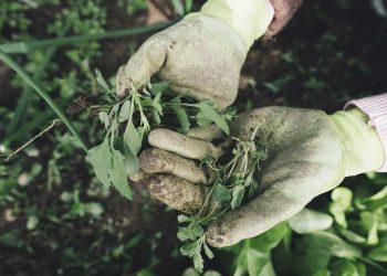 Gartenmesser Vergleich (Top 5) | Blumenmesser & Pflanzmesser