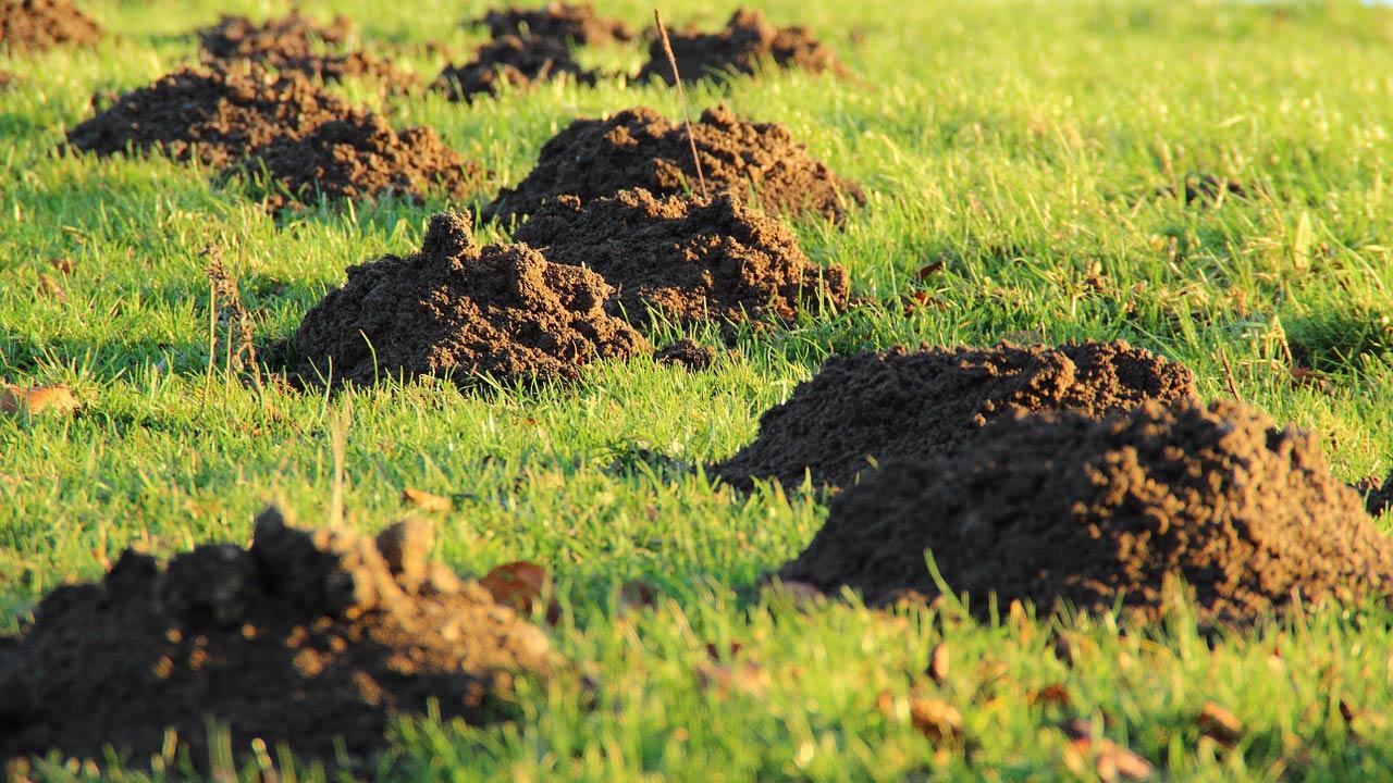 Alten Rasen Abtragen Entfernen Anleitung Kosten überblick