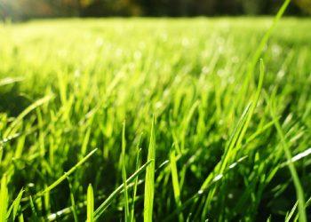 Nagelschuhe Vergleich (Top 5) | Die besten Estrichschuhe für Rasen?