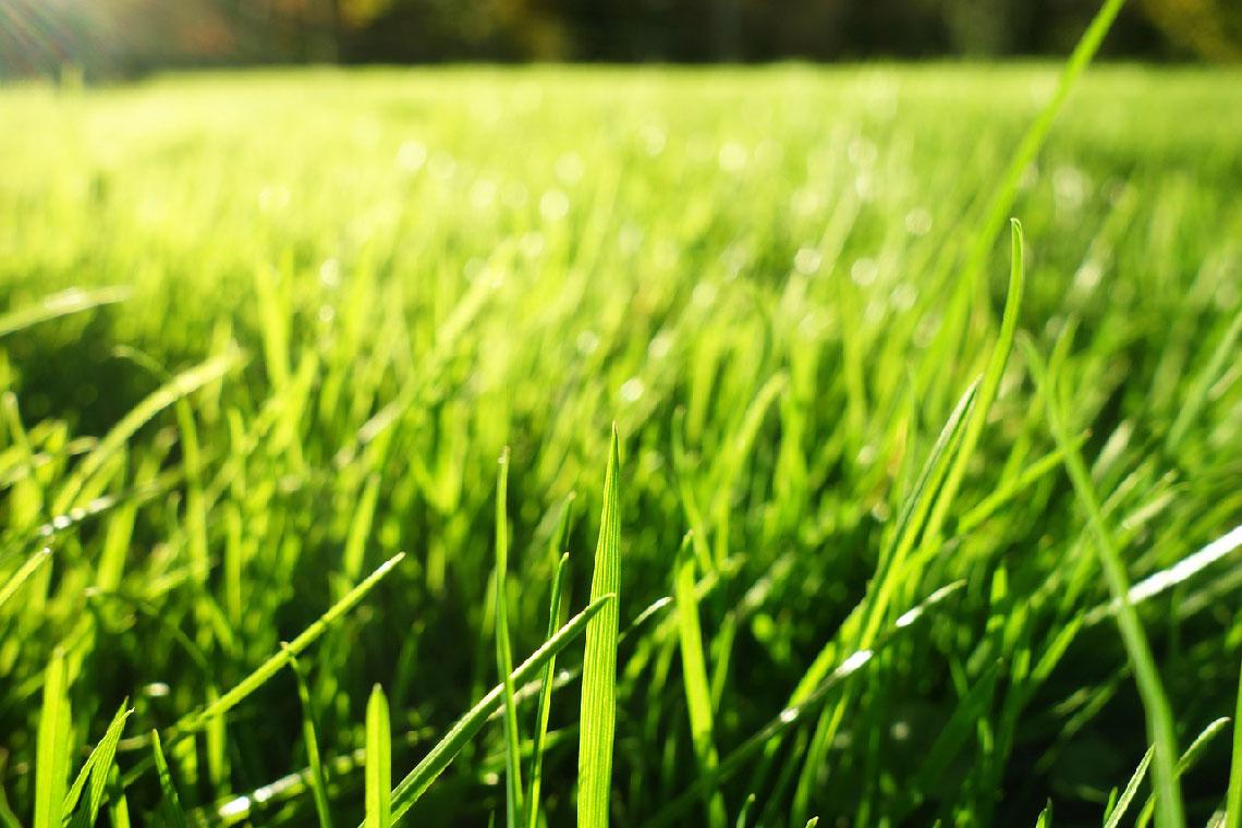 Außergewöhnlich Nagelschuhe Vergleich (Top 5) | Die besten Estrichschuhe für Rasen? #BI_86