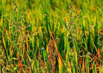 Unkraut im Garten bestimmen (Bilder) | Arten in Rasen & Terrasse erkennen