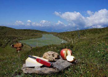 Gärtnermesser Vergleich (Top 5) | Rasenmesser & Grasmesser