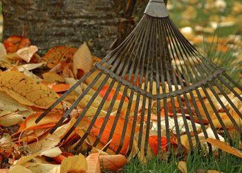 Rasen säen im Herbst (September, Oktober) | Neu anlegen & einsäen