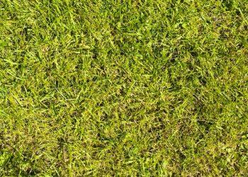 Rasen düngen im Frühjahr (März, April) | Rasendüngung im Frühling