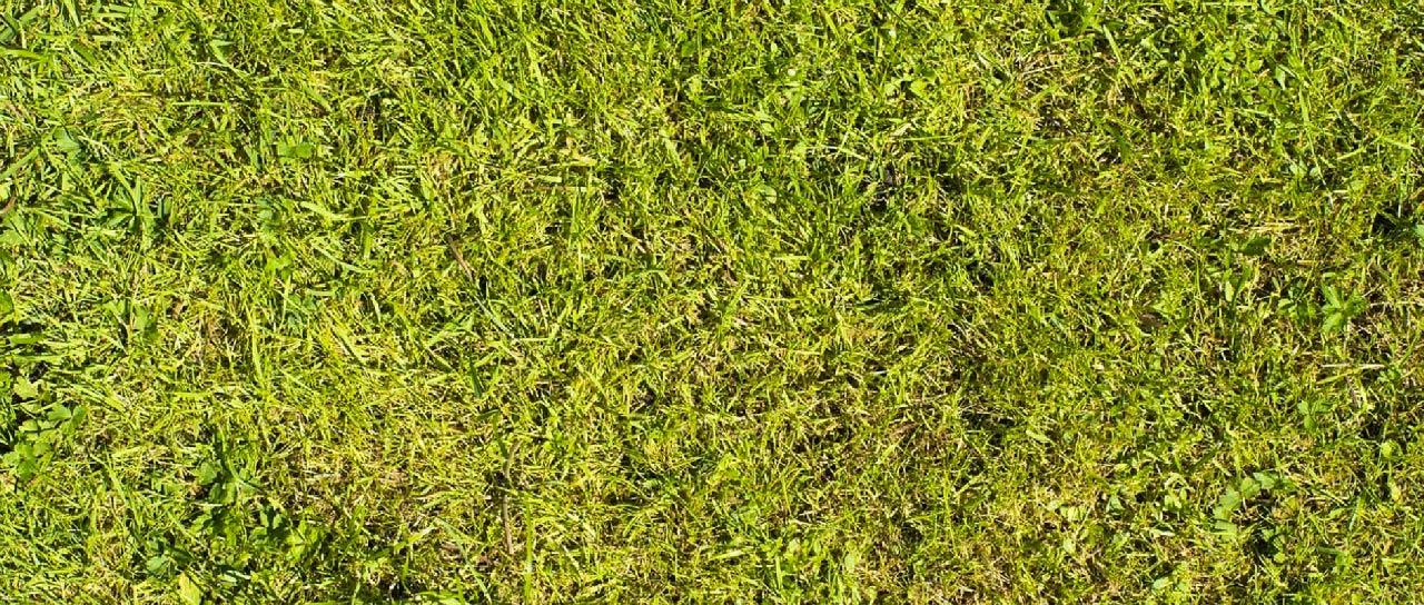 Rasen Düngen Im Frühjahr März April Rasendüngung Im Frühling