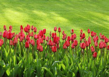 Gartensense Vergleich (Top 5) | Beste Klappsense & Holzsense?