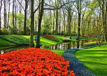 Grastrimmer Vergleich (Top 5) | Rasenkantentrimmer & Gartentrimmer