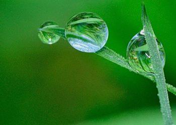Rasen düngen bei Regen? Dünger ausbringen auch ohne Regenwetter?