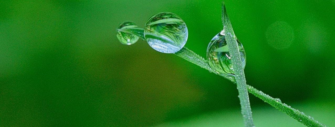 Beliebt Bevorzugt Rasen düngen bei Regen? Dünger ausbringen auch ohne Regenwetter? @XE_47