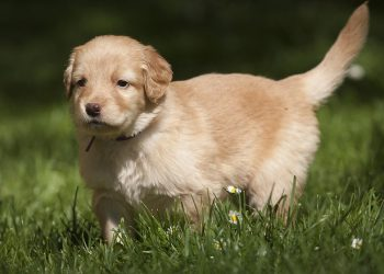 Rasen düngen trotz Hund | Ist Rasendünger schädlich für Hunde?
