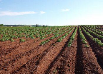 Pflugschar Vergleich | Top 5 Häufelpflug & Handpflug für Rasen