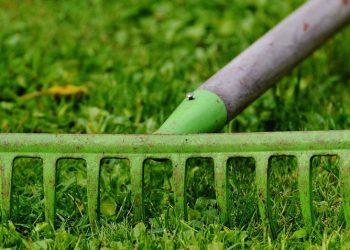 Rasen erst kalken und dann vertikutieren? (Reihenfolge Tipps)