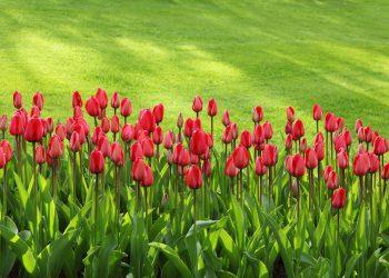 Aerifizierer Vergleich (Top 5) | Der beste Bodenlüfter für Rasen?
