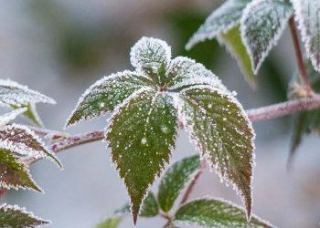 Rasen säen bei Frost im Winter | Welche Temperatur zum Einsäen?