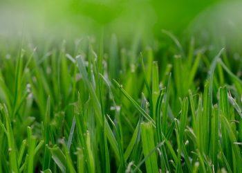 Rasen düngen ab wann? Welcher Zeitpunkt im Jahr der Beste ist