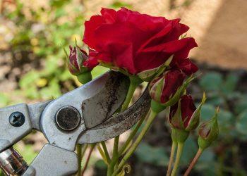 Blumenschere Vergleich | Top 5 Pflanzenschere & Floristenschere