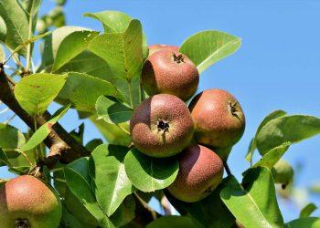 Baumsäge Vergleich (Top 5) | Astsäge & Baumastsäge für Zweige