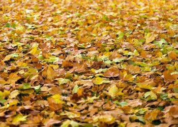 Gartenabfallsack Vergleich (Top 5) | Gartensack klein & groß