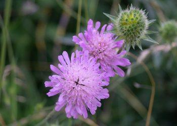 Unkraut mit lila Blüten bestimmen (Tipps) | Violette Unkräuter
