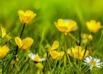 Rasenpflege im Frühjahr (März & April) | Rasen im Frühling pflegen