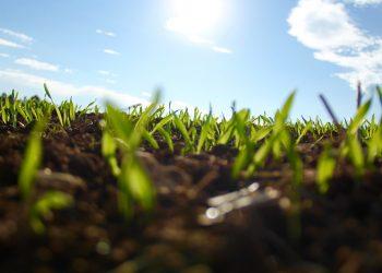 Ab wann Rasen säen? (Jahreszeit) | Zeitpunkt zum neu Anlegen