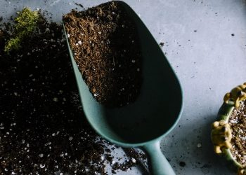 Rasen kalken und düngen gleichzeitig? (Rasenpflege Reihenfolge)