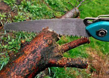 Handsäge für Holz (Top 5) | Beste Gartensäge im Vergleich