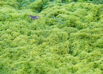 Moos im Rasen entfernen (Tipps) | Entmoosen, bekämpfen, befreien