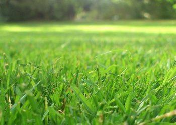 Rasenschnitt liegen lassen | Dünger oder schädlich für Rasen?