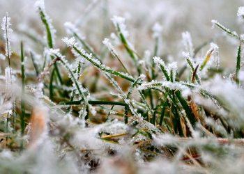 Rasenpflege im bzw. nach dem Winter | Rasen pflegen im Februar