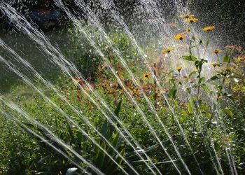 Rasenpflege im Sommer (Juni & Juli) | Rasen pflegen bei Hitze