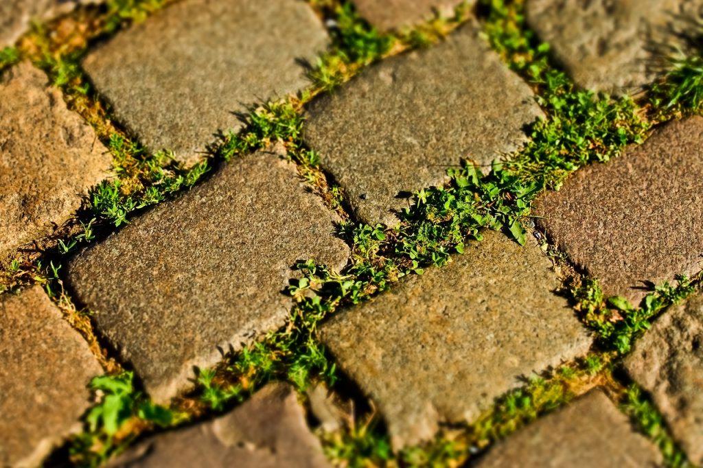 unkraut zwischen steinen fugen platten dauerhaft entfernen
