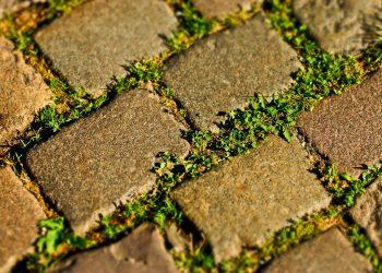 Unkraut zwischen Steinen, Fugen & Platten dauerhaft entfernen