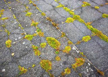 Wildkrautbürste für Motorsense, Freischneider & Rasenmäher | Unkrautbürste & Fugenreiniger