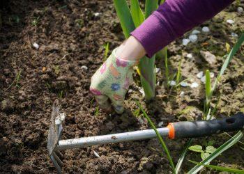 Garten Frasen In 3 Schritten Anleitung Fur Boden Rasen