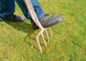 Moosvernichter Vergleich (Top 5) | Moosentferner für Rasen