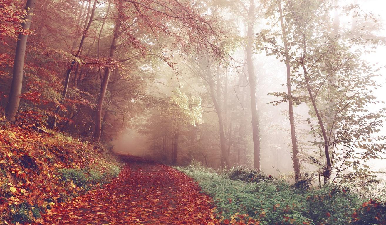 Viel Laub im Wald