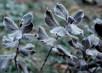 Wintervlies Vergleich | Gartenvlies, Thermovlies & Winterschutzvlies